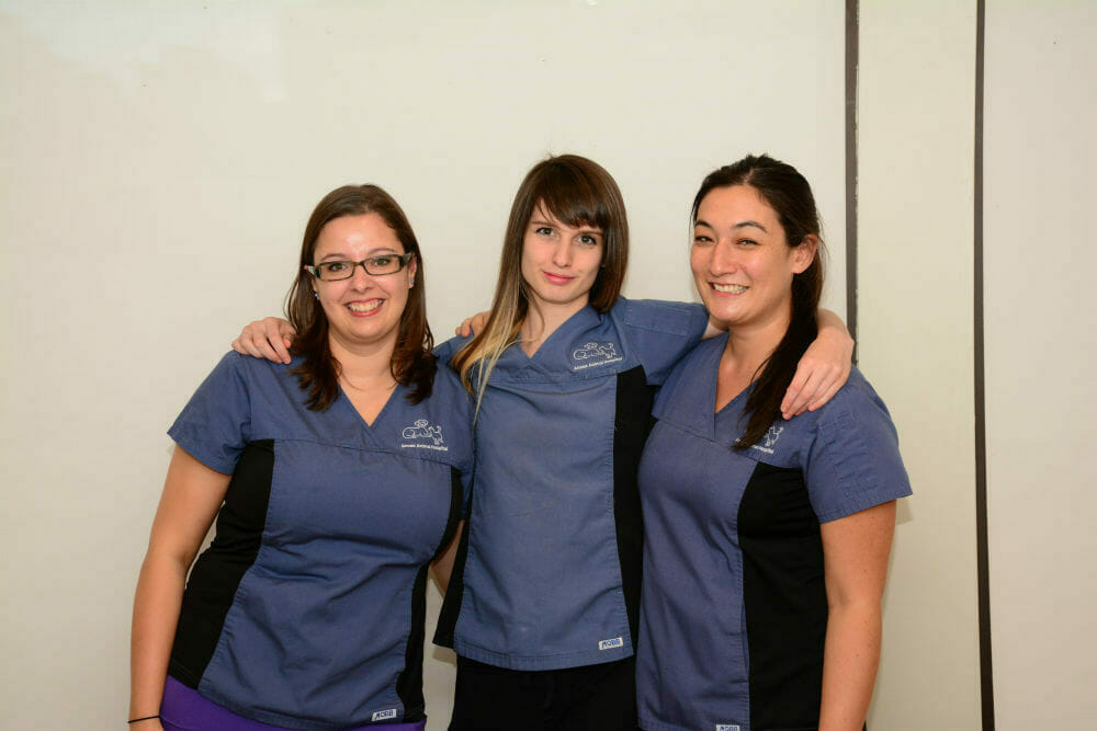 Annex animal hospital veterinary tech team