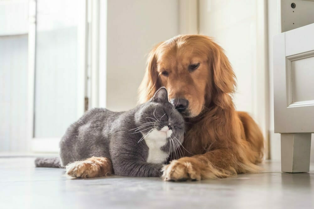 Cat and dog lying down and snuggling up to each other