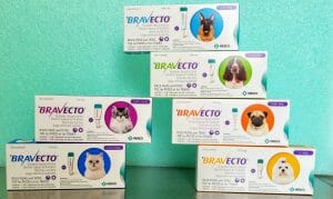 Stacked boxes of Bravecto flea and tick treatment