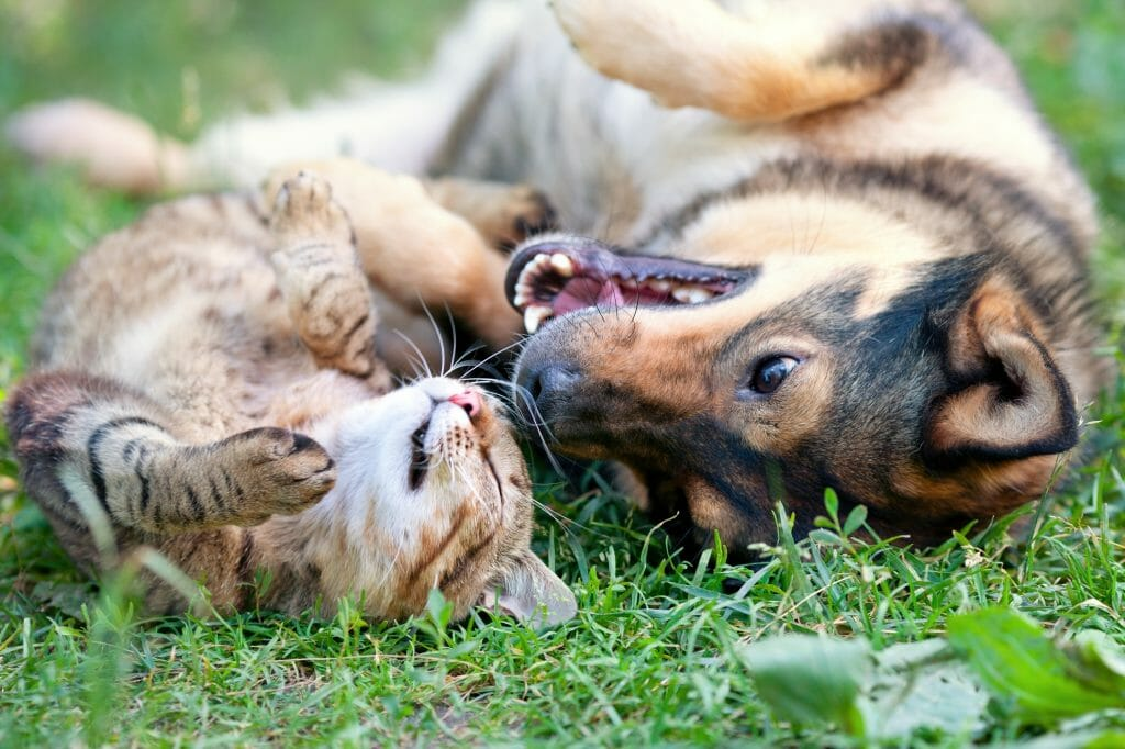 Cat and dog lying in grass
