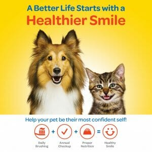 A better life starts with a healthier smile banner with smiling dog and cat