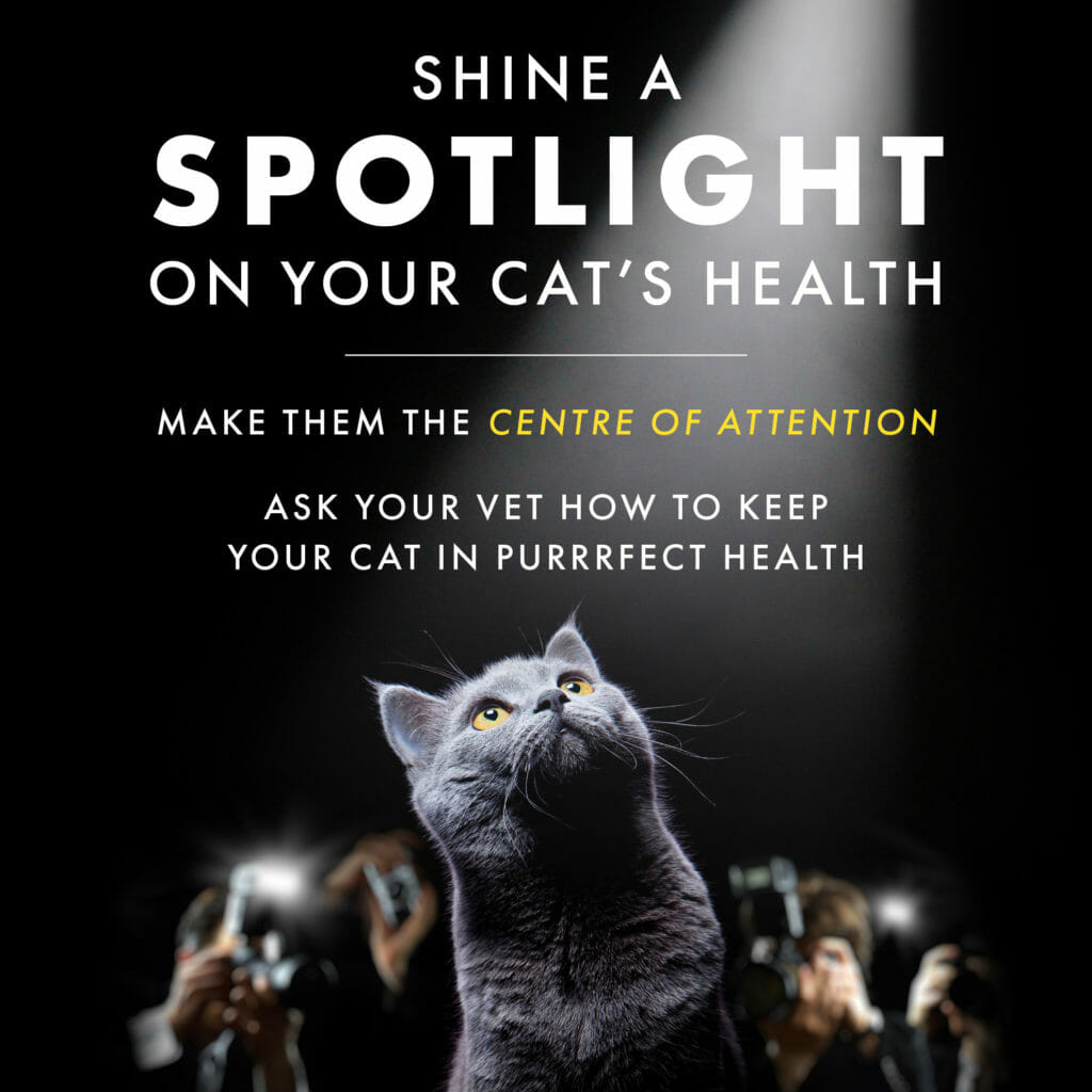 Shine a spotlight on your cat's health banner